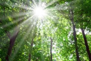 Consulenza ed Assistenza Legale nel Diritto Ambientale a Poggibonsi